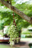 Hanging Garden. A flower pot Royalty Free Stock Photos