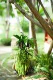 Hanging Garden. A flower pot Stock Image