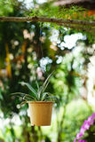 Hanging Garden. A flower pot, hanging on bench in the park. Cont Royalty Free Stock Image