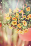 Hanging garden flowers in pot on lovely outdoor summer nature background stock photography