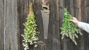 Hanging garden herbs bunch on old wooden wall stock video footage