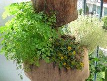 Hanging garden Stock Photography