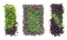 Hanging gardens Stock Images