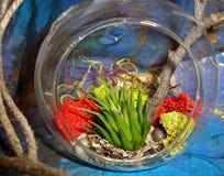 Hanging Globe Terrarium Stock Image