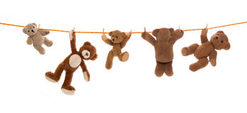 Hanging group of teddy bears on a clothing line with pegs. Royalty Free Stock Image