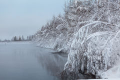 Hanging heavy snow-covered branches of trees on lake Stock Images
