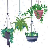 Hanging house plants and flowers in pots. Royalty Free Stock Photos