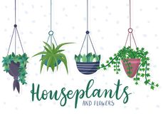 Hanging house plants and flowers in pots. Stock Photography