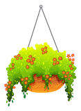 A hanging houseplant Stock Image