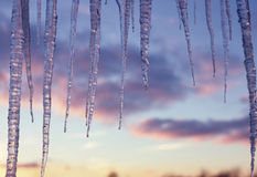 Hanging Icicles. Icicles growing in the sunlight Royalty Free Stock Photo