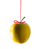Hanging isolated apple Stock Image