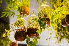 Hanging jars Stock Image