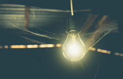 Hanging light bulbs with glowing one and web spider. Royalty Free Stock Image