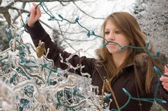 Hanging the Lights. Teenage girl hangs christmas lights on an ice covered bush in New England Stock Photography