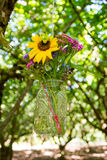 Hanging Mason Jars of Flowers Stock Photography