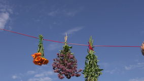 Hanging  medical herbs flowers bunch on red string stock video