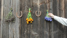Hanging medical herbs on old wooden wall and horseshoe stock video