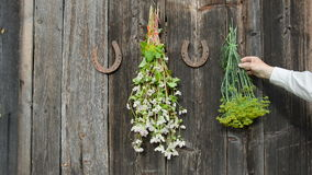 Hanging medical and spice herbs bunch on wall stock video footage