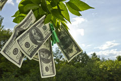 Hanging money. Dollar currency hanging on green tree leafs royalty free stock photos
