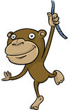 Hanging Monkey Royalty Free Stock Photo