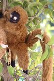 Hanging monkey artificial royalty free stock photography