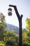 Hanging old street lamp in the garden Stock Image