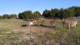 Neighboring Donkeys Stock Images