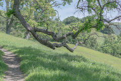 Hanging Over a Trail Stock Image