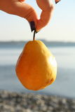 Hanging pear can't eat Royalty Free Stock Photos