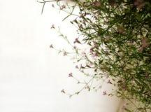 Hanging plant on balcony royalty free stock photo