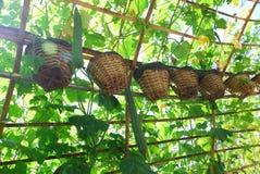 Hanging plant Stock Image