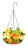 A hanging plant with a caterpillar Royalty Free Stock Image