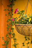 Hanging plant. Colorful background with a hanging potted plant Stock Images