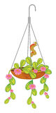 A hanging plant with flowers. Illustration of a hanging plant with flowers on a white background Royalty Free Stock Image