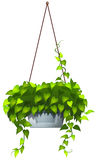 A hanging plant Royalty Free Stock Images