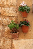Hanging plant pots with flowers Stock Photography