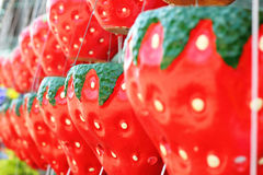 Hanging plant pots - pots strawberry hanging a long way. Royalty Free Stock Photo