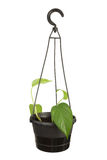 Hanging Plant Royalty Free Stock Photos