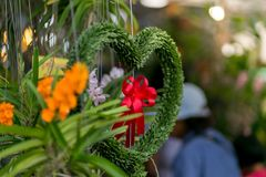 Hanging Plant shaped like heart and red ribbon. valentine concep. T stock photos