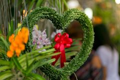 Hanging Plant shaped like heart and red ribbon. valentine concep. T royalty free stock photo