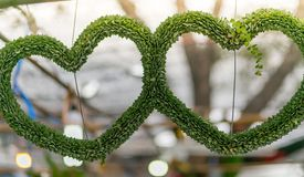Hanging Plant shaped like heart. valentine concept.  stock photography