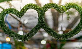 Hanging Plant shaped like heart. valentine. Concept royalty free stock photos