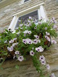 Hanging Planter. On window of a stone walled house in Pennsylvania, US. Early summer evening available light Royalty Free Stock Photo