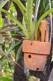 Hanging Planter Stock Photo