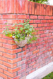 Hanging Planter at red brick wall in garden Royalty Free Stock Images