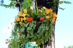 Hanging Plants against Light Blue Sky. Hanging plants with light blue sky on the downtown plaza Stock Photos