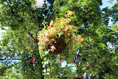 Hanging Plants in Santa Fe. Hanging Flowers adorn the Santa Fe Downtown Plaza Royalty Free Stock Image