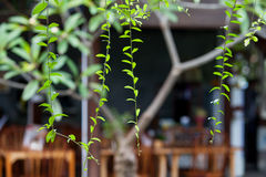 Hanging plants with young leaves amid the courtyard. Hanging plants with young leaves against the background of the courtyard of the house. Creation of greenery Stock Images