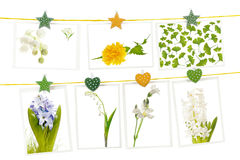 Hanging postcards with spring flowers Stock Photos