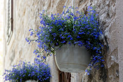 Hanging pot cropped. Picture of pot with flowers hanging by the door of old stone building Stock Photos